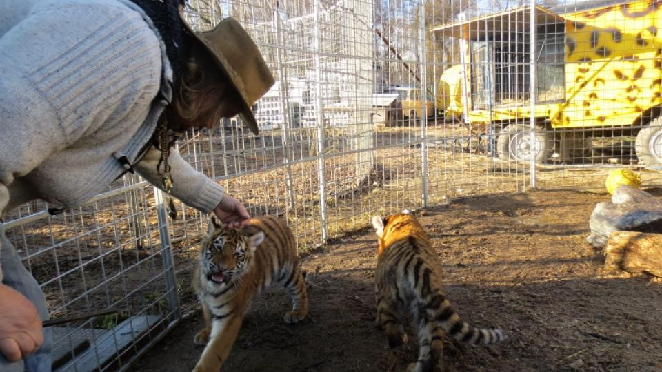 Jaromír Joo si hladí mládě tygra