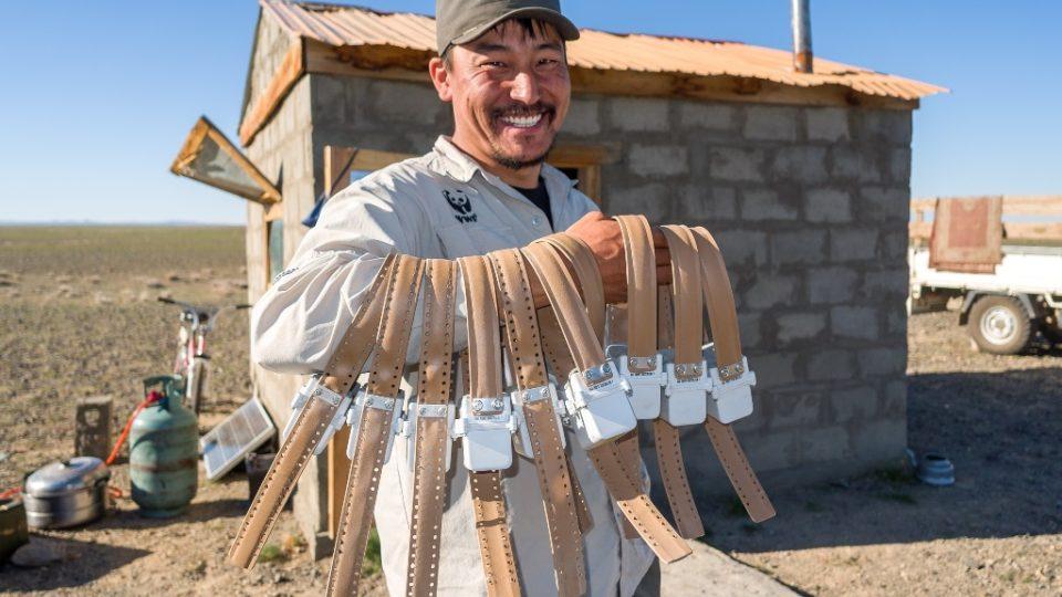 Pan Gantulga z WWF ukazuje telemetrické obojky, které pomohou sledovat migrační trasy sajg mongolských