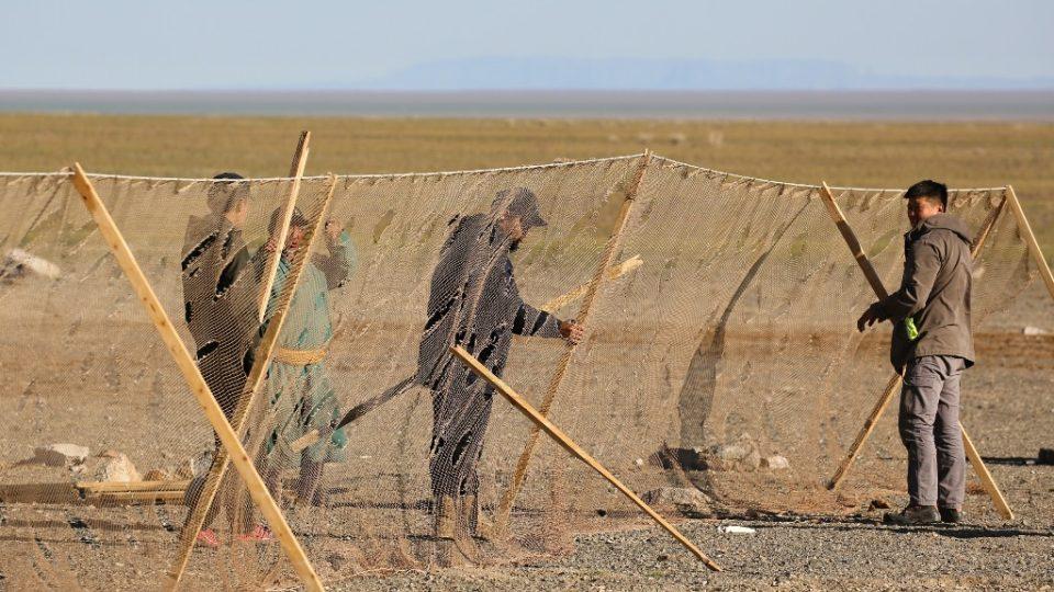 Na odchyt sajg mongolských se stavěly osmdesát metrů dlouhé sítě