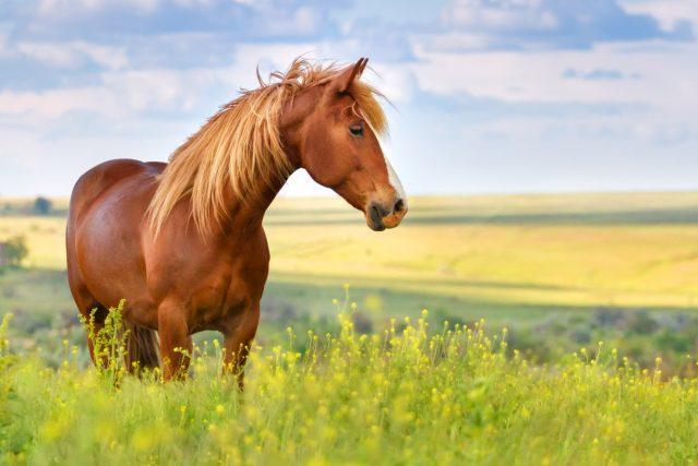 """Kdo by nechtěl mít """"doma"""" koně"""