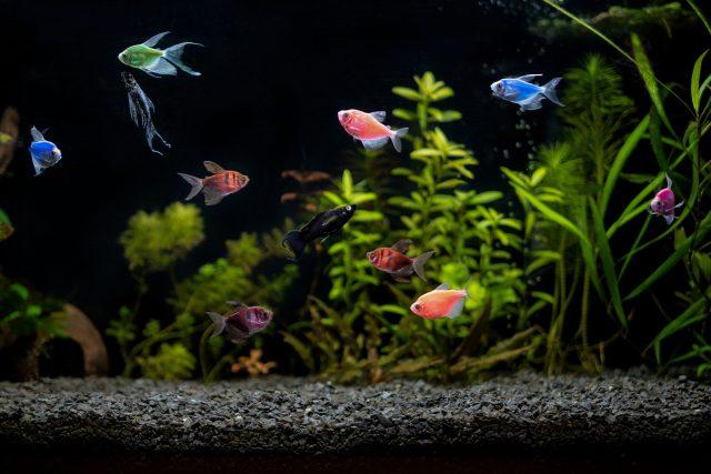 Chcete si pořídit rybičky? | foto: Shutterstock