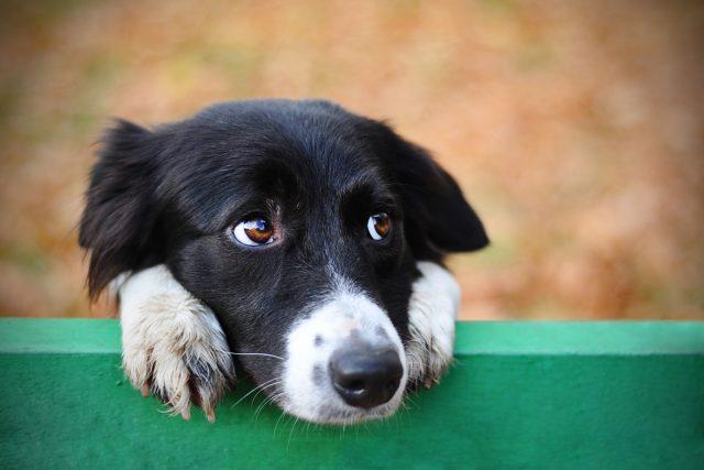 Dočasná péče pomáhá opuštěným pejskům | foto: Shutterstock