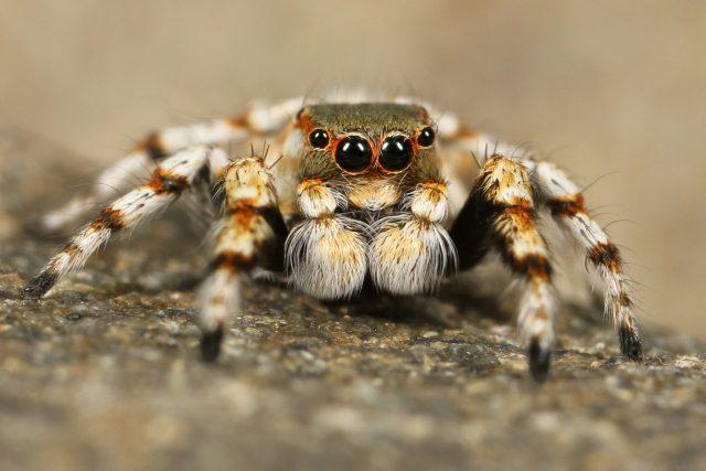 I pavouk může být roztomilý, co říkáte?