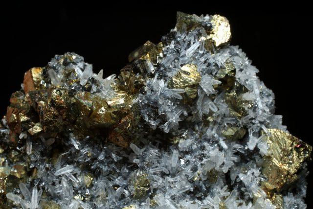Kočičí zlato vypadá trochu jako to opravdové   foto: Shutterstock