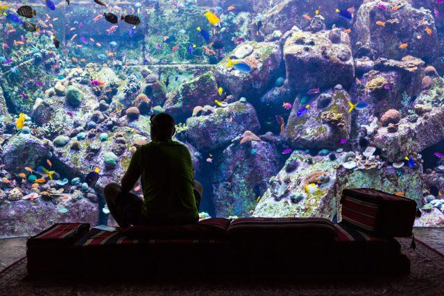 Hotel Atlantis,  který vám nabídne pokoje s výhledem do světa mořských ryb najdete v Dubaji | foto:  S-F,  Shutterstock
