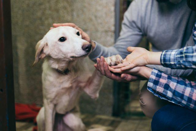 Lidé jsou více doma a častěji si berou psy z útulků | foto: Shutterstock