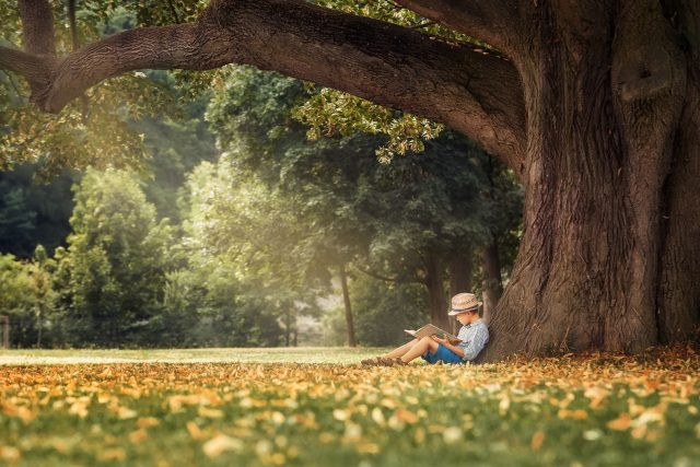 Stromy na nás mají blahodárný vliv,  říká přírodovědec | foto: Shutterstock