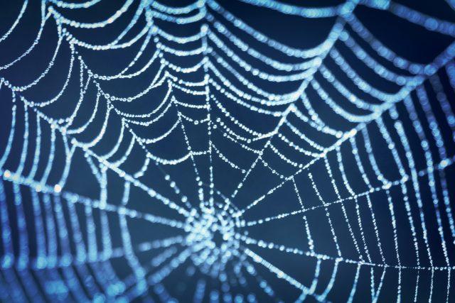 Proč pavouci tkají sítě? | foto: Shutterstock