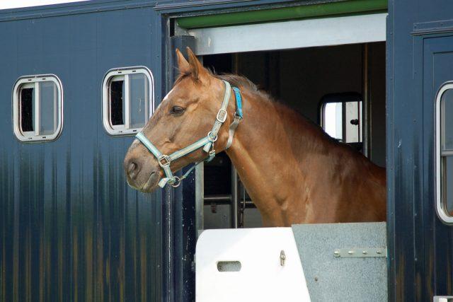 Jak probíhají transporty koní? | foto: Shutterstock