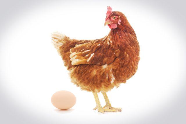 Vo bylo dřív - slepice, nebo vejce?