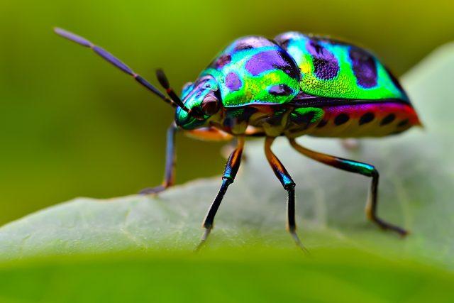 Hmyz je pro přírodu poklad. A nejen tím, jak krásně může vypadat
