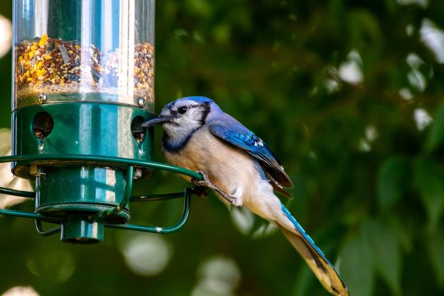 Co ptákům chutná?