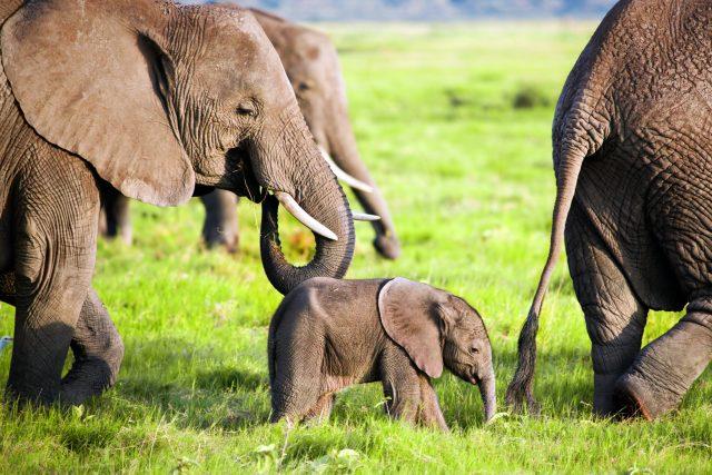 Dokáže slon vyskočit?
