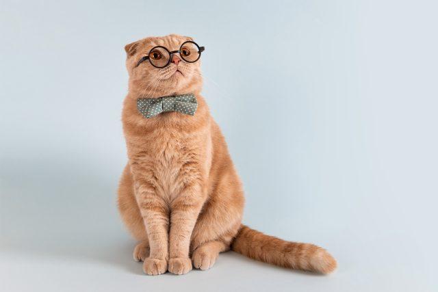 Může kočka zastávat funkci ve vládě? Může! | foto: Shutterstock