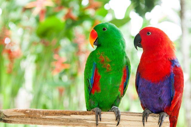 Jak se jmenují tihle krásní papoušci?