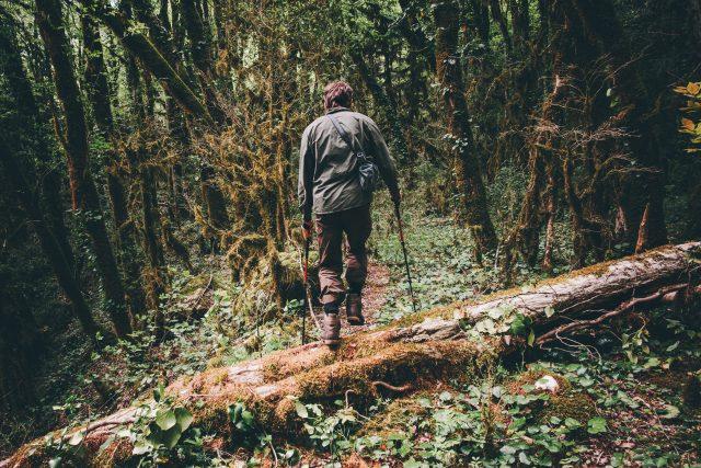 Co byste dělali,  kdybyste se ztratili v hlubokém lese? | foto: Shutterstock