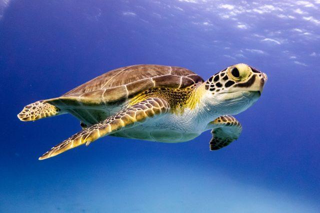 Želvy se skvěle přizpůsobily svému okolí   foto: Shutterstock