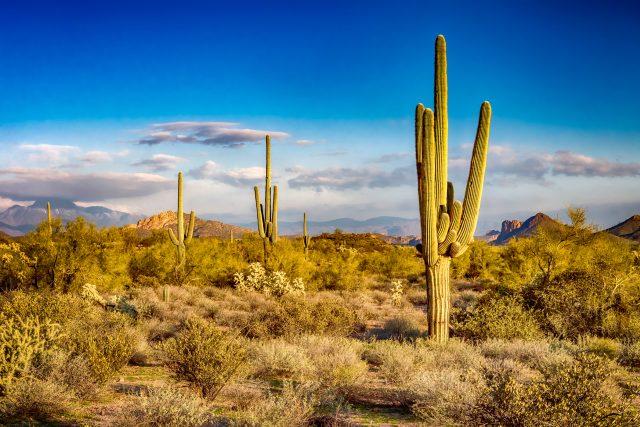 Jak to,  že kaktus vydrží tak dlouho bez vody? | foto: Shutterstock
